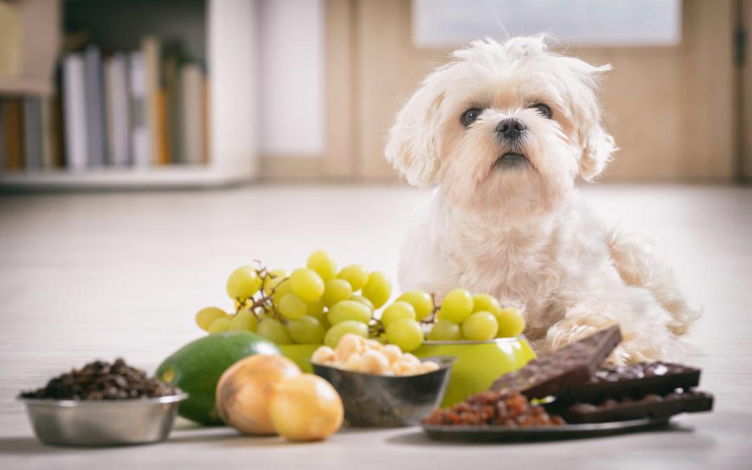 Cosa NON possono mangiare i cani: 15 alimenti vietati